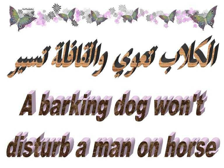 الكلاب تعوي